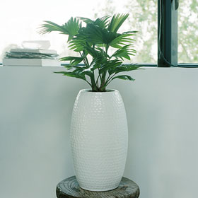 Todo para tu jard n peque os trucos de decoraci n de for Jardines pequenos horizontales