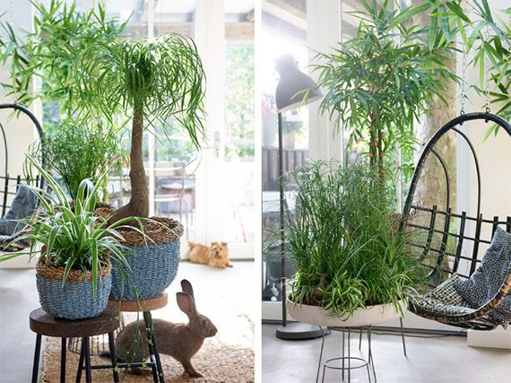 Plantas de interior 'pet-friendly'