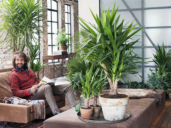 Verdeesvida yucas un verde toque tex mex for Planta yuca exterior