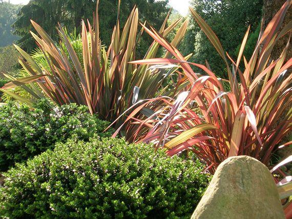Verdeesvida phormium se llevan las rayas - Plantas de exterior resistentes al calor ...