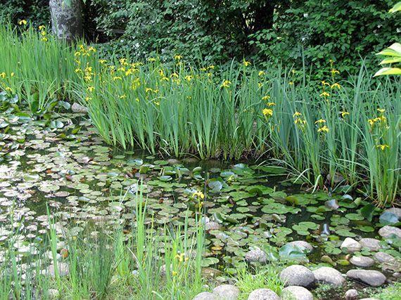 Verdeesvida el ecosistema de un estanque for Estanques y jardines acuaticos