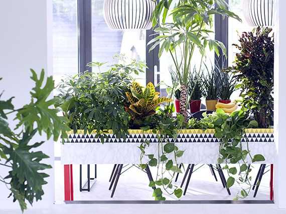 Verdeesvida plantas de interior decorativas y sin for Cuales son las plantas decorativas