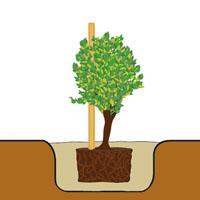 Paso 2: Plantar