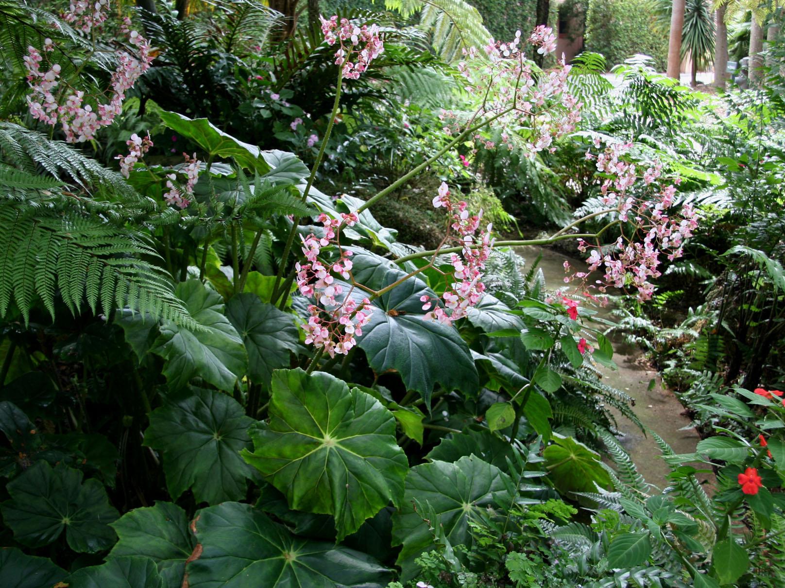 verdeesvida :: jardines de sombra
